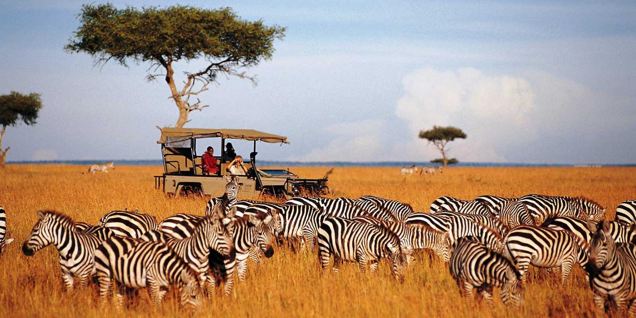 Partir en Afrique pour un safari